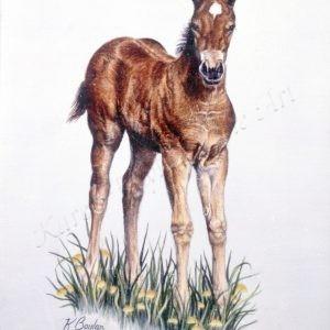 bay colt
