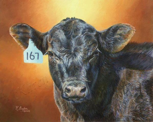 angus calf 167