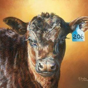 angus calf 206