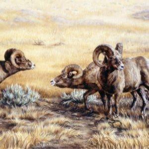 yellowstone bighorn