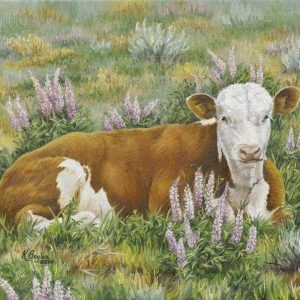 hereford calf